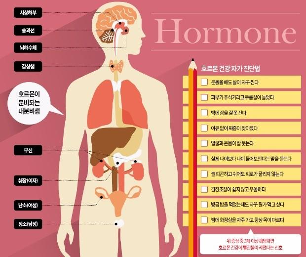 인슐린·성장호르몬·멜라토닌… '몸의 지배자' 호르몬 균형 잡아야 건강