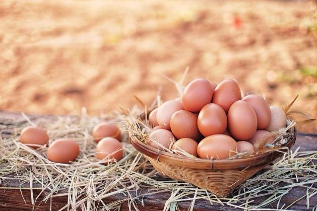 '살충제 계란' 감시 지속… 밥상안전 지킨다