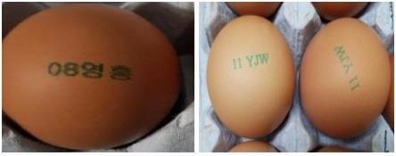 경기 포천·충남 천안 농가 계란서 살충제 성분 검출