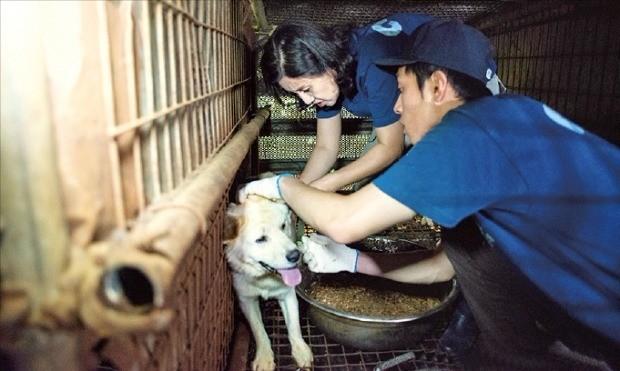 동물보호단체 케어의 박소연 대표(왼쪽)와 활동가가 포천 '강아지 농장'에서 구조활동을 펼치고 있다. 케어 제공