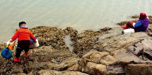 가우도 해변에서 해산물을 채취하는 섬 주민들.