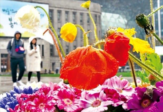 봄비 머금은 꽃