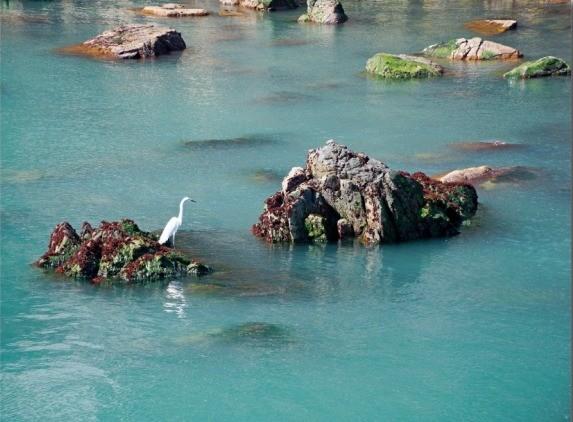 홍도는 절경의 기암괴석으로 유명하지만 빼어난 동백으로도 명성이 높다.