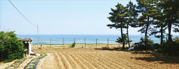 남북한 화해 분위기가 조성되면서 군사분계선과 가까운 접경지 일대의 토지 거래가 늘고 있다. 강원 고성군의 한 토지. 최진석 기자