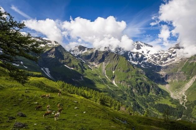 그로스글로크너 하이 알파인 로드와 알프스 산맥