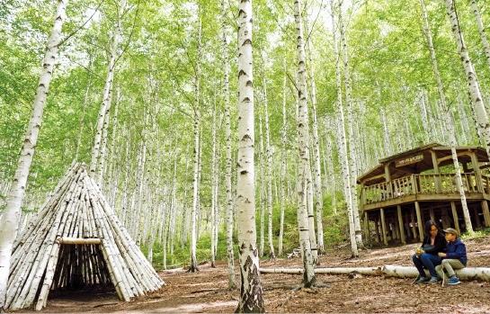 인제 자작나무 숲속 교실