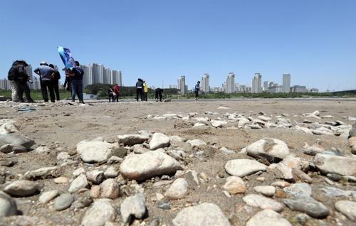 '세종보 수문 개방 6개월' 금강 자연 생태계 되살아났다