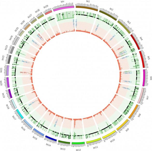 형질전환 소 유전체 지도 일부