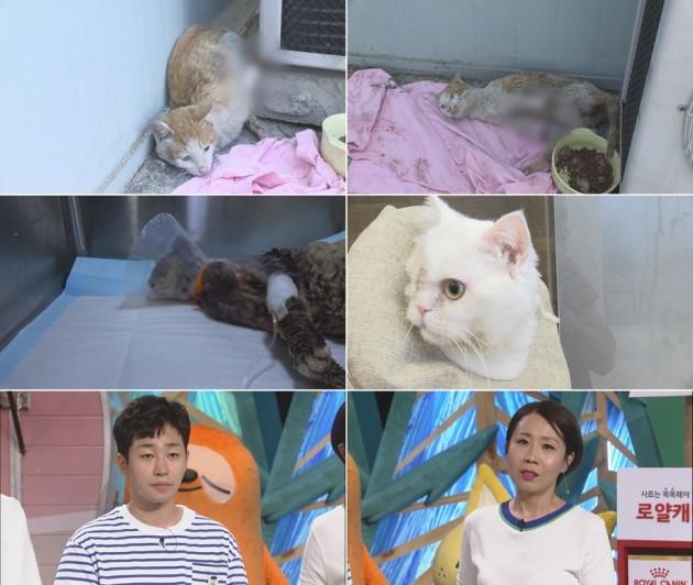 사진=SBS 'TV동물농장' 방송화면 캡처