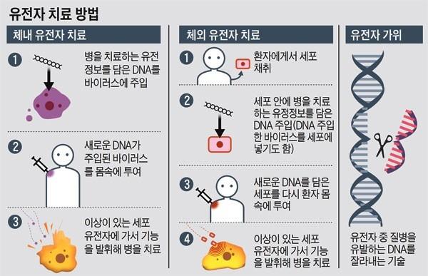 유전자 치료 방법(자료: 보건복지부)