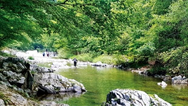 흙길, 돌길, 물길따라… '숲 속 트레킹' 더위를 잊다