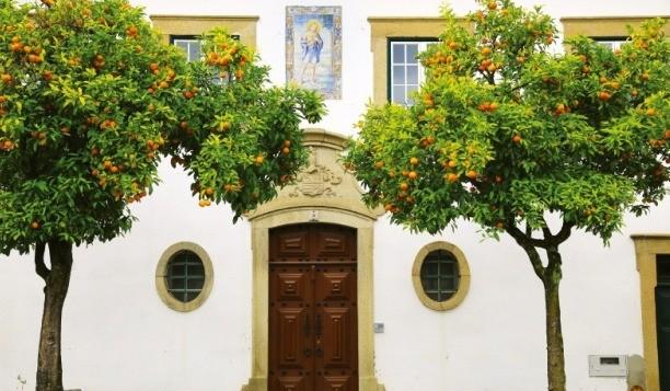 오렌지가 주렁주렁 달린 카스텔루 브랑쿠의 가로수.