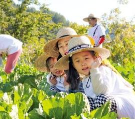 교동 장독대마을 농작물 수확체험.