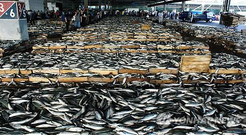 노르웨이산에 '국민 생선' 자리 뺏기는 연근해 고등어