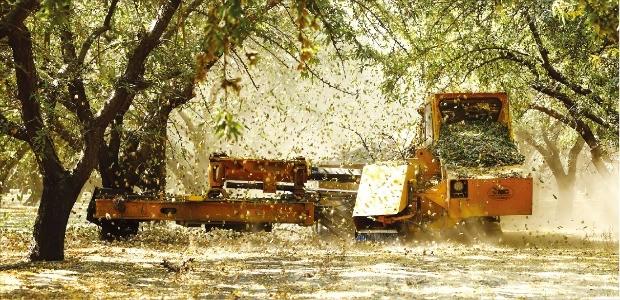 캘리포니아 농가의 아몬드 수확은 대부분 기계화돼 있다. 사진은 셰이커가 아몬드 나무를 흔들어 열매를 떨어뜨리는 모습. /캘리포니아아몬드협회 제공