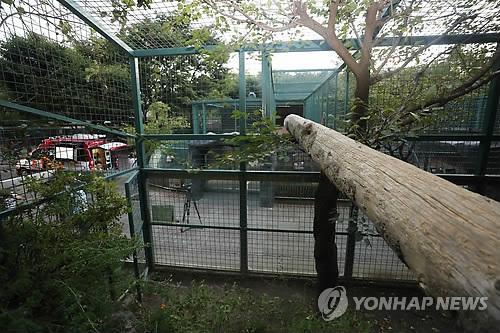 대전 오월드 탈출 퓨마 4시간 30분만에 끝내 사살