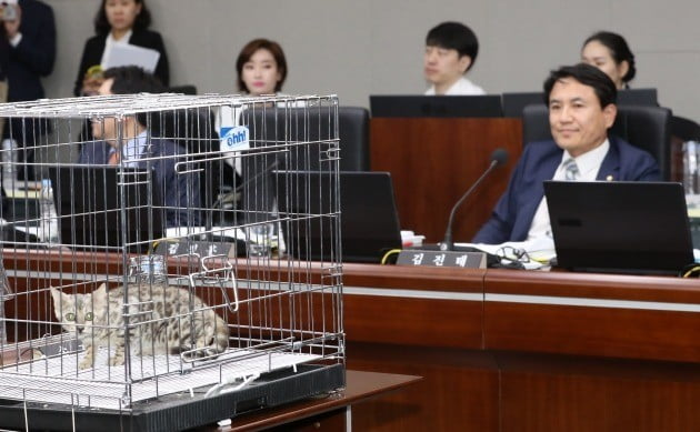 지난 10일 정부세종청사에서 열린 국회 정무위원회 국정감사에서 김진태 자유한국당 의원(오른쪽)이 고양이를 놓고 대전동물원 푸마 사살 관련 질의를 하고 있다. [사진=연합뉴스]