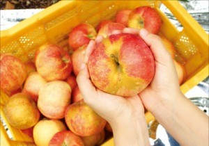 프레시어글리에서 판매하는 사과.