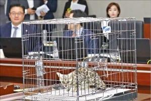 국감장에 등장한 '벵갈고양이'