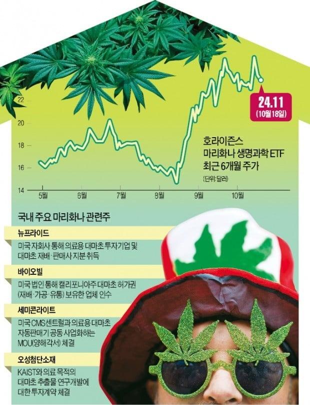 '글로벌 테마株' 마리화나, 한 번 투자해봐?