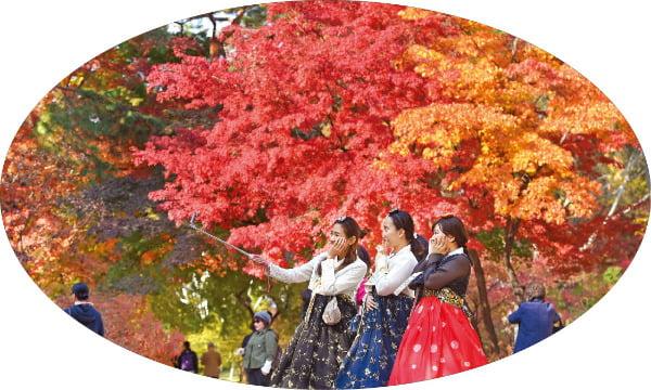 깊은 가을에 물든 산…청춘의 꿈도 각자 색으로 피어나기를