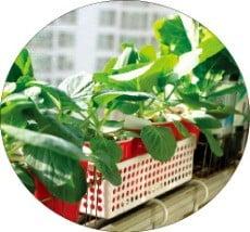 식물 200여종 가득 '베란다 텃밭'…집에서 키우는 재미 '쏠쏠'