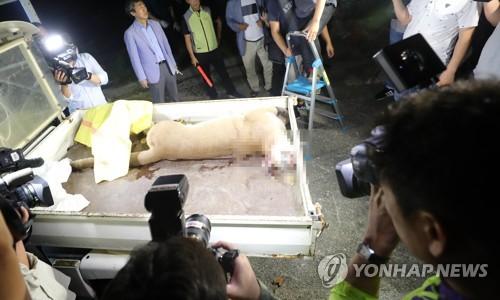 '퓨마 탈출' 대전오월드 관리 총체적 부실…동물원장 중징계