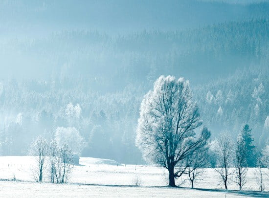온통 하얀 눈으로 뒤 덮인 캐나다 겨울 풍경.