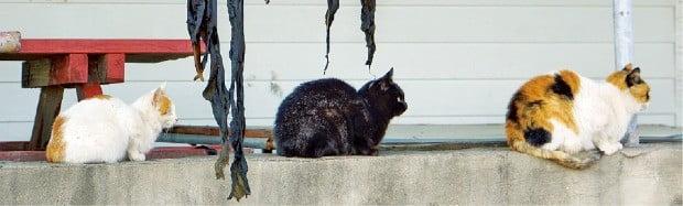 고즈넉한 신지도의 분위기와 묘하게 어울리는 섬 고양이들