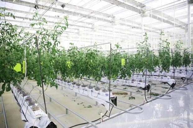 한국디지털미디어고 교내 스마트팜에서 농작물을 재배하고 있는 모습. 한국디지털미디어고 제공