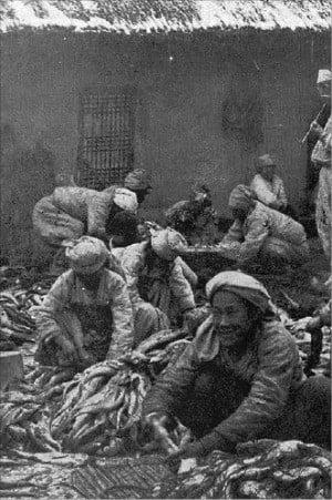1920년대 명태를 손질하는 원산항의 아낙네들.