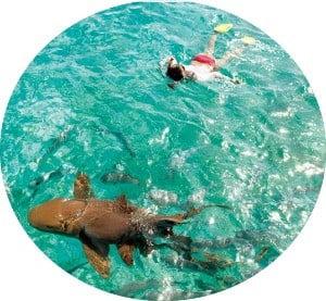 순한 상어와 함께 즐기는 스노클링.