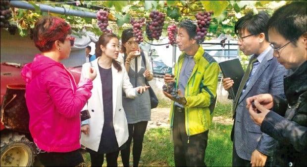 충남 천안 포도농장을 찾은 중국 바이어들에게 거봉 포도의 장점을 설명하고 있는 박용하 대표.