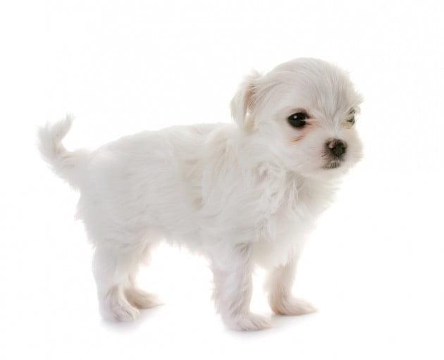 생후 3개월 된 강아지를 내던져 죽게 만든 사건이 논란이 되고 있다 _ 사진 게티 이미지 뱅크