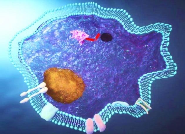 세포막 전송 펩타이드(aMTD)가 병든 세포 안으로 약리 물질을 전송하는 모습. 셀리버리 제공