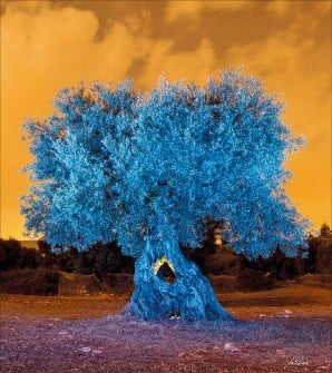 [사진이 있는 아침] 푸르게 빛나는 '불멸의 나무'