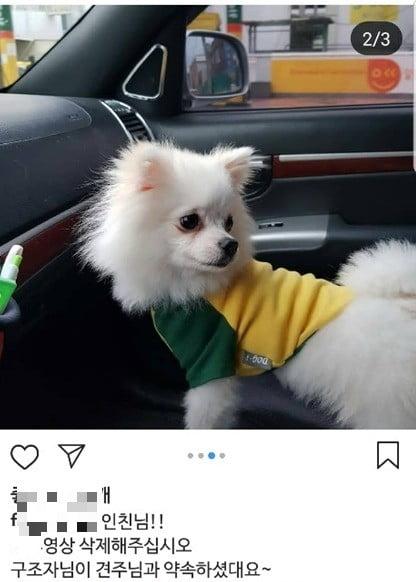 부산 강아지 학대 논란