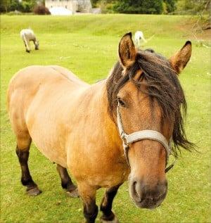 하이랜드 걷기여행 중 목초지에서 만난 조랑말.