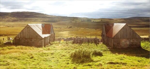 광활하고 너른 하이랜드 목초지 풍경.