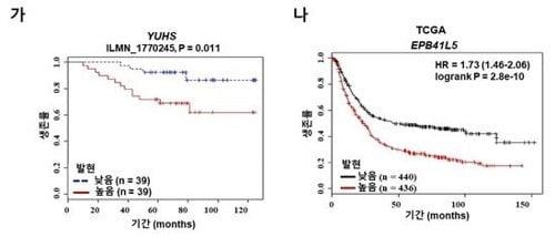 전이성 위암 발병 핵심인자 발견…치료법도 제시(사진=연합뉴스)