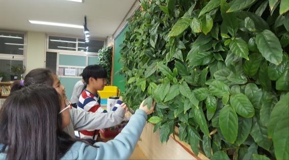 정부, 초미세먼지 줄이는 '빌레나무' 어린이집에 보급