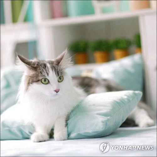 한국 반려동물 돌봄시장 1조8000억원…1등 공신은 '냥 집사'