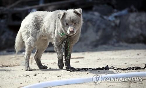 [강원산불] '몸도 마음도 타버렸어요'…남겨진 동물도 후유증에 몸서리