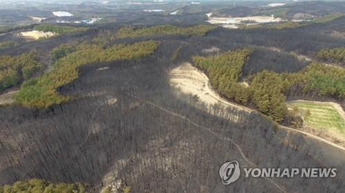 강원산불 피해 530㏊→1천757㏊…3배 넘게 늘어난 이유는?