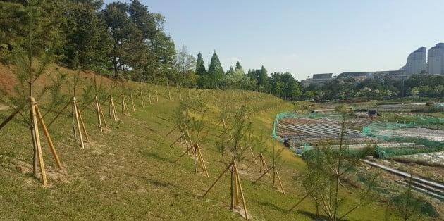 청주시, 미세먼지 차단 위해 나무 1만7000여 그루 식재