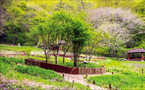 전남 순천 남도삼백리 천년불심길의 조계산 생태체험 야외학습장