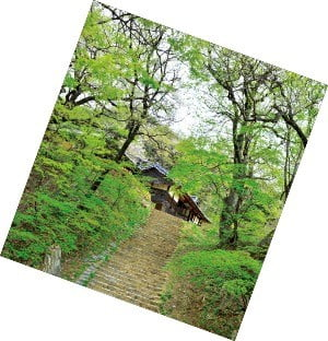 山寺 가는 '천년 숲길', 초록으로 눈을 씻고 길에서 깨달음을 얻다