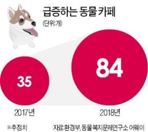 '허가제' vs '등록제'…또 불붙은 동물카페 논란
