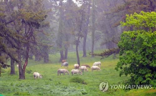 제주 강한 비바람…항공·선박 운항 차질·행사 축소