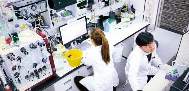 바이오업체 셀리버리의 직원들이 연구에 몰두하고 있다. 이 업체도 내년부터 주 52시간 근로제를 적용받는다. /셀리버리 제공